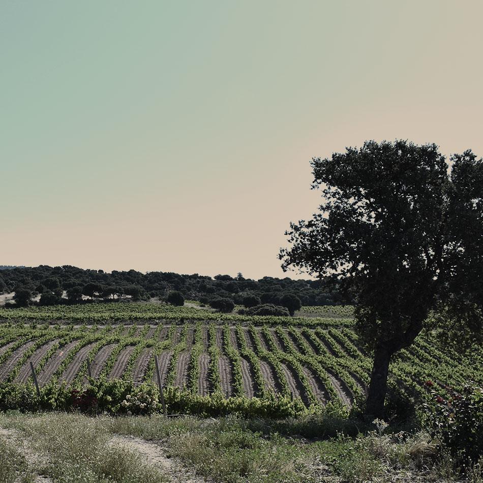 Estate's wines